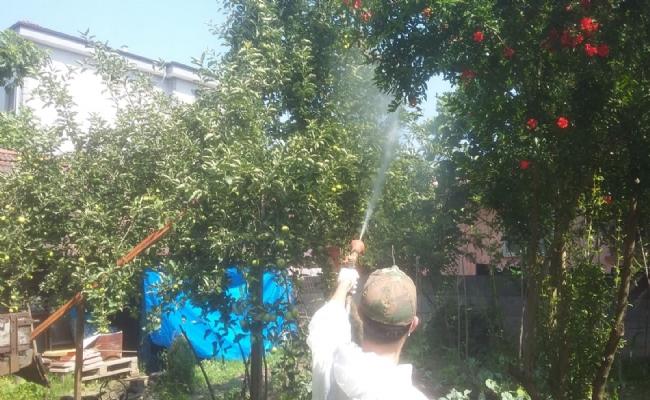 Düzce Belediyesi Amarikan Kelebeğine Karşı  Mücadeleyi Başlattı