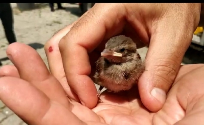 Yavru Serce  Kuşuna   İtfaiye  Ekiplerinin  Şefkat  Eli